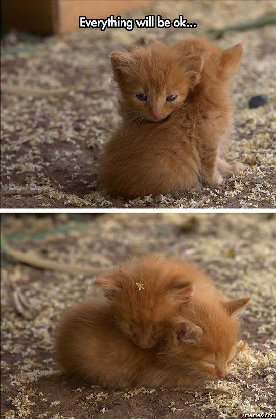 caturday meme with pics of ginger kittens comforting each other