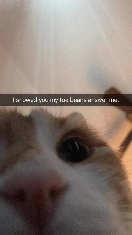 caturday meme with snapchat from cat expecting response after showing you its paws