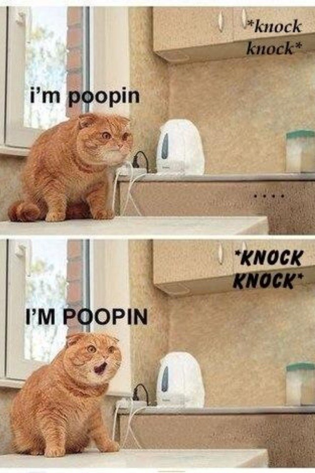 caturday meme with pics of cat being interrupted in the bathroom