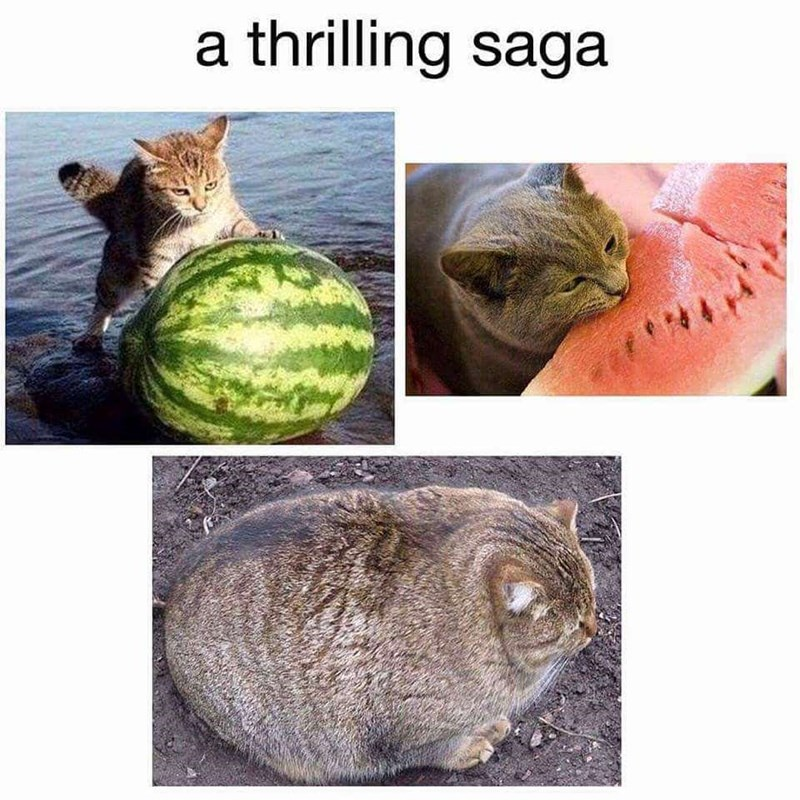 caturday meme with series of pics depicting a cat eating a watermelon whole
