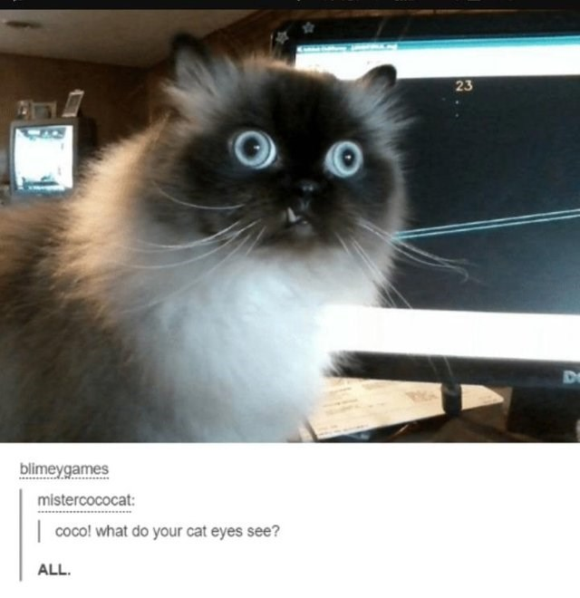 caturday meme about a cat with large eyes