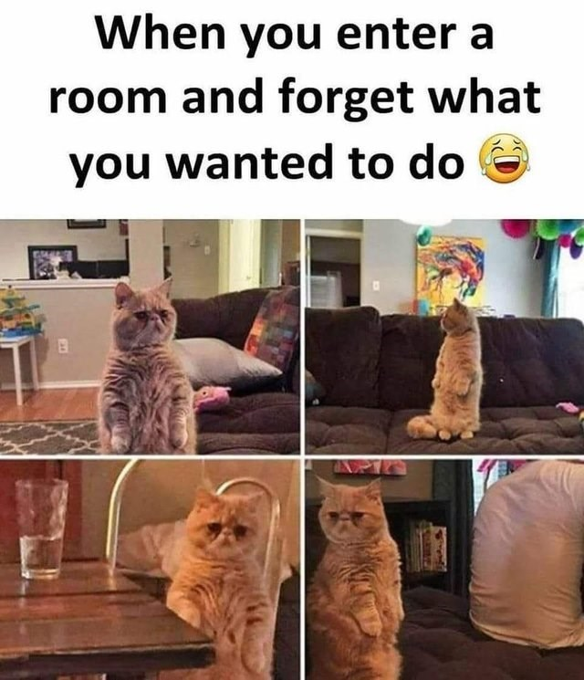 caturday meme about forgetting what you wanted to do with pics of a cat sitting on its hind legs looking confused
