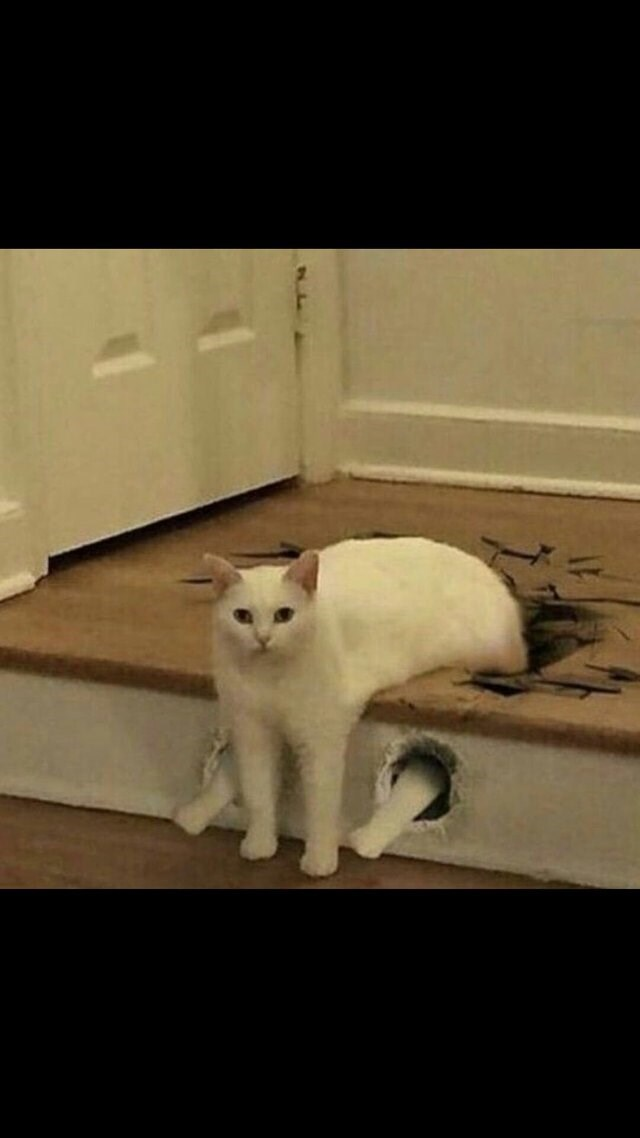 caturday meme with photoshopped pic of a cat breaking the floor with its paws