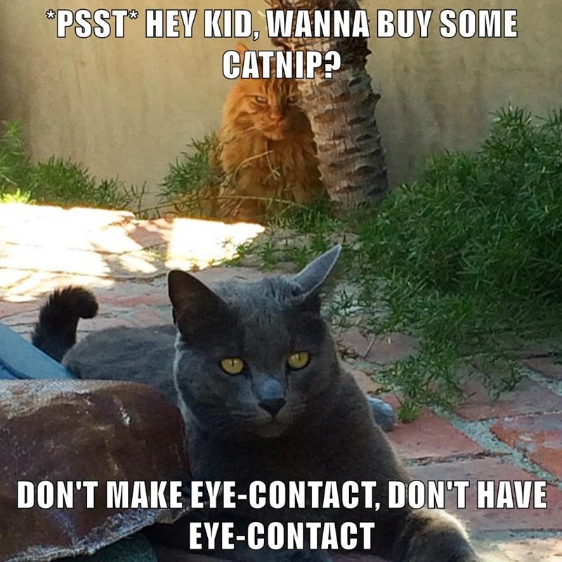 """Cat - """"PSST° HEY KID, WANNA BUY SOME CATNIP? DON'T MAKE EYE-CONTACT, DON'T HAVE EYE-CONTACT"""