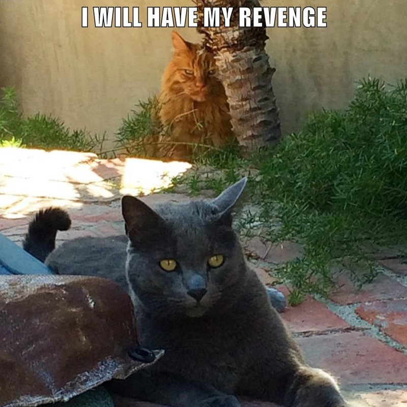 Cat - IWILL HAVE MY REVENGE