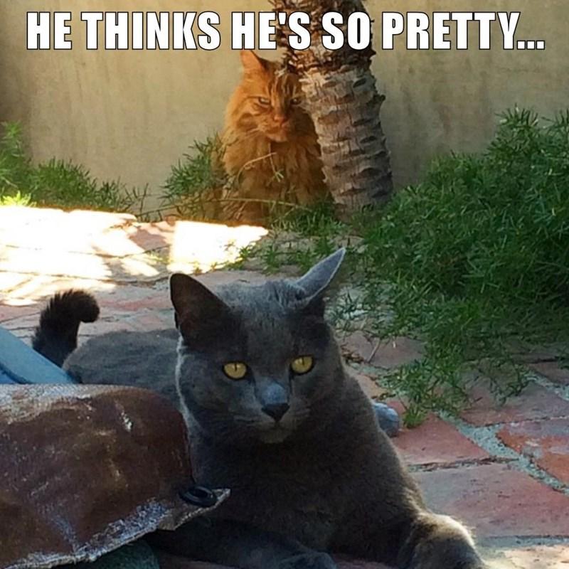 Cat - HE THINKS HE'S SO PRETTY..