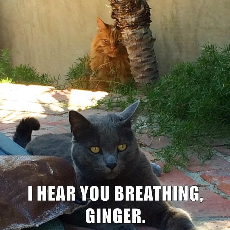 Cat - I HEAR YOU BREATHING GINGER.