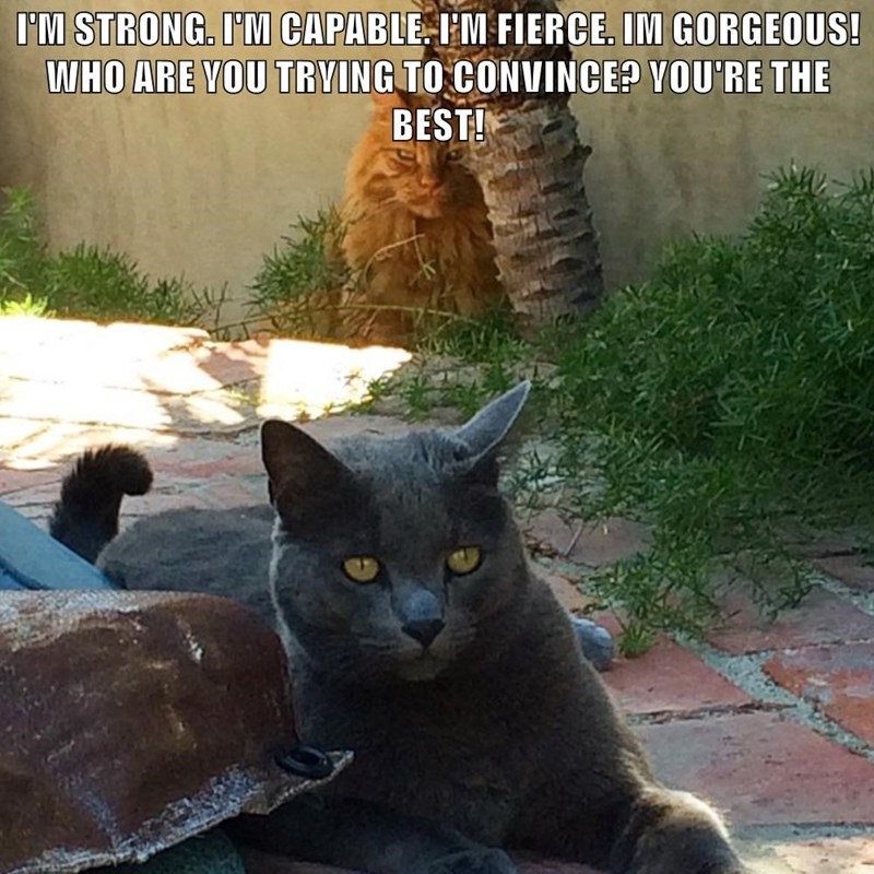 Cat - I'M STRONG. I'M CAPABLE IM FIERCE. IM GORGEOUS! WHO ARE VOU TRVING TO CONVINCE? VOU'RE THE BEST!