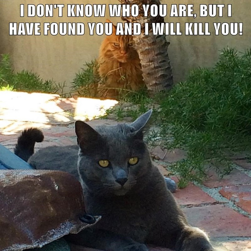 Cat - I DON'T KNOW WHO YOU ARE, BUT I HAVE FOUND YOU ANDI WILL KILL YOU!