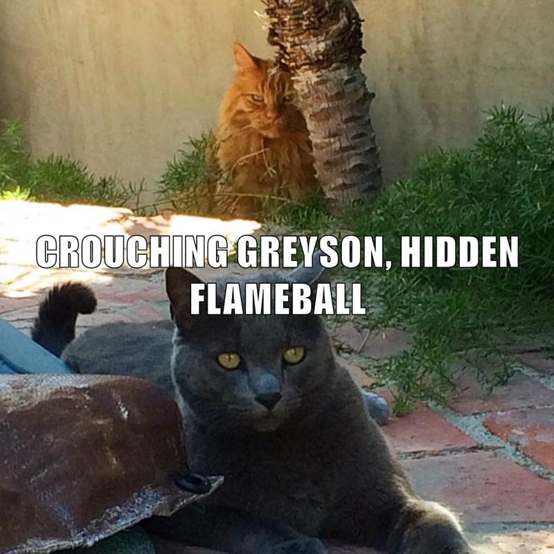 Cat - CROUCHING GREYSON, HIDDEN FLAMEBALL