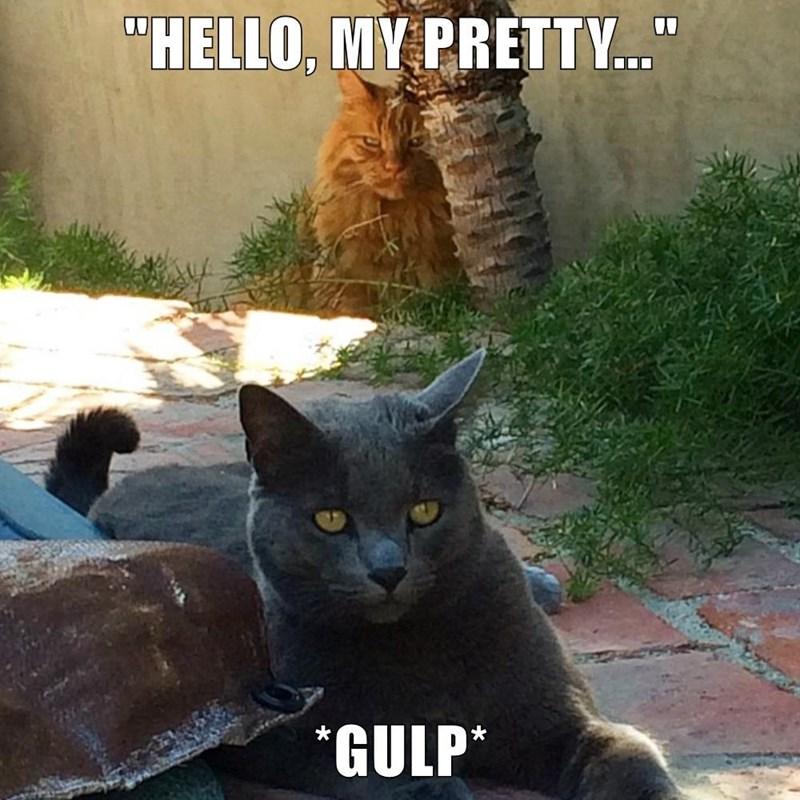 "Cat - ""HELLO, MY PRETTY..."" GULP*"