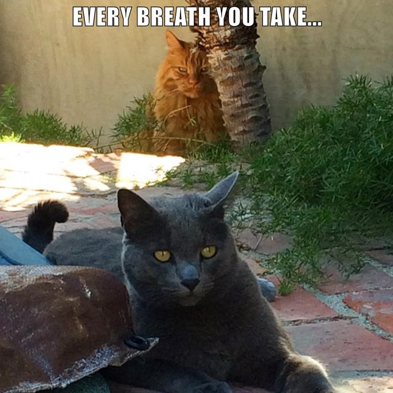 Cat - EVERY BREATH YOU TAKE...