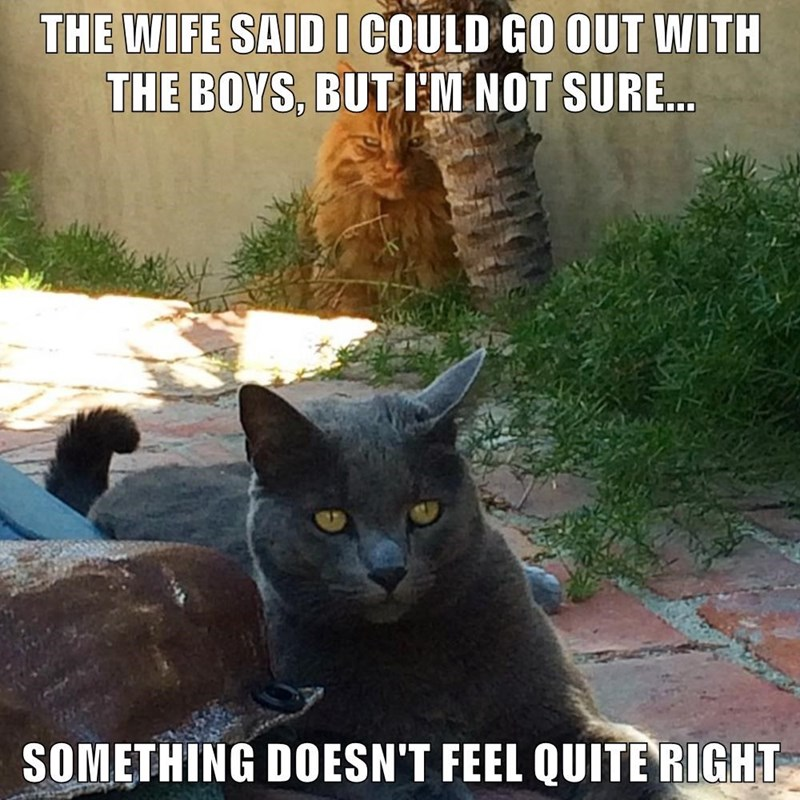 Cat - THE WIFE SAIDICOULD GO OUT WITH THE BOYS, BUT IM NOT SURE... SOMETHING DOESN'T FEEL QUITERIGHT