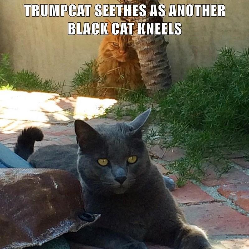 Cat - TRUMPCAT SEETHES AS ANOTHER BLACK CAT KNEELS