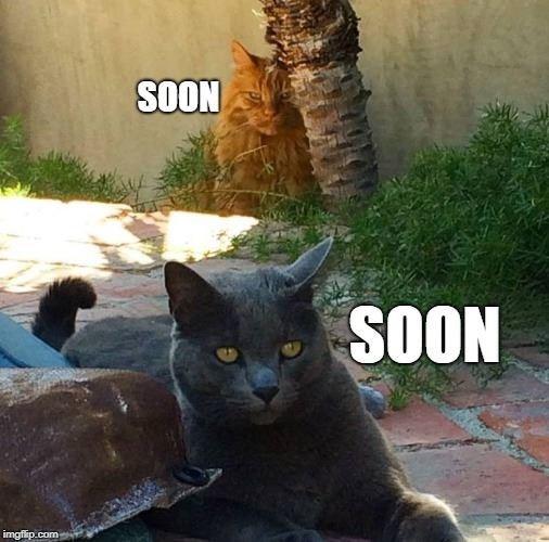 Cat - SOON SOON imgfip.com