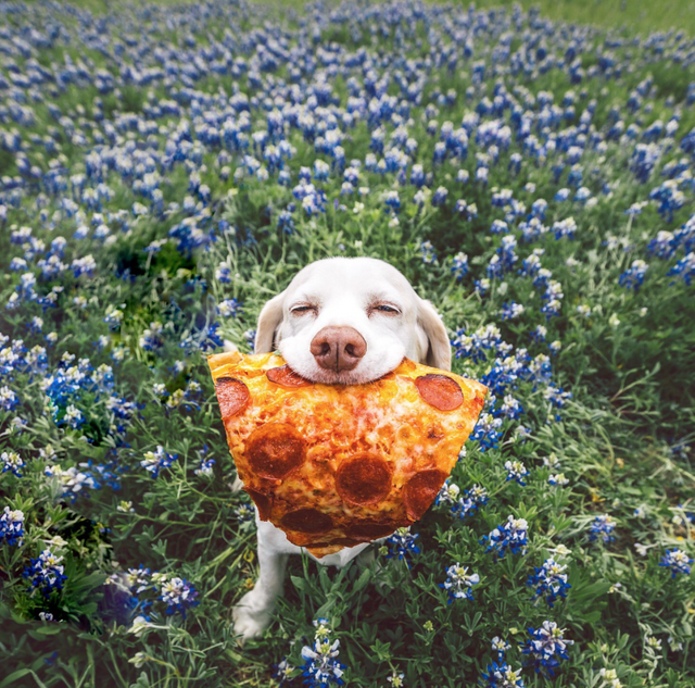 pizza cute mood happy dog happy happiness - 9224475392