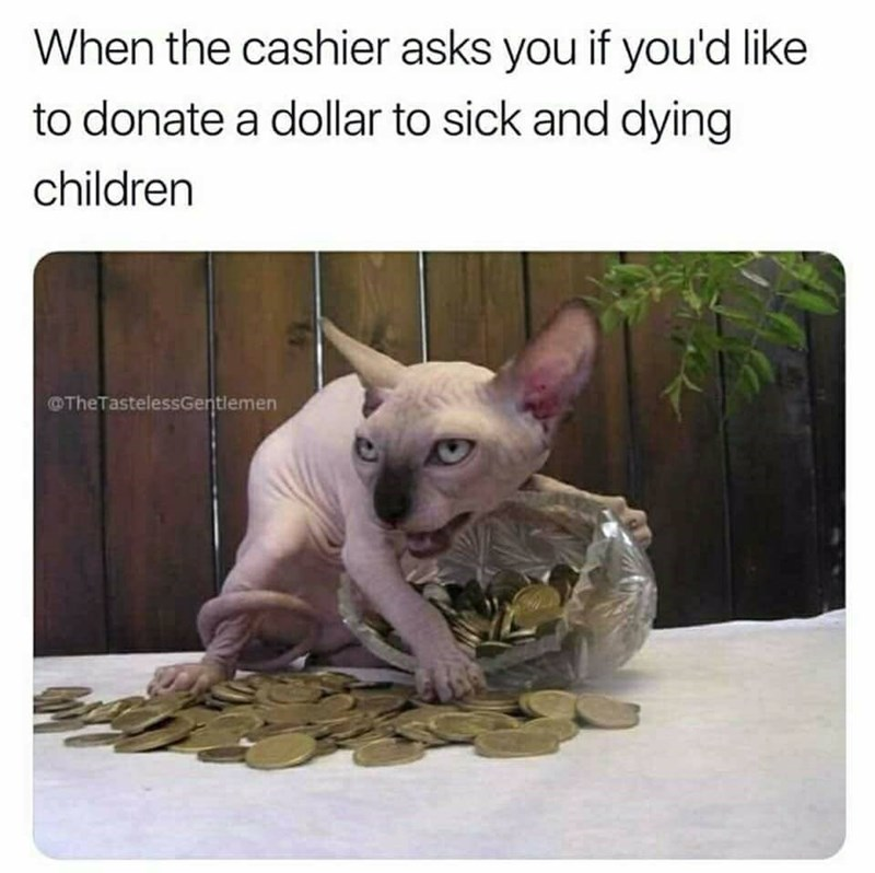 Cat - When the cashier asks you if you'd like to donate a dollar to sick and dying children TheTastelessGentlemen
