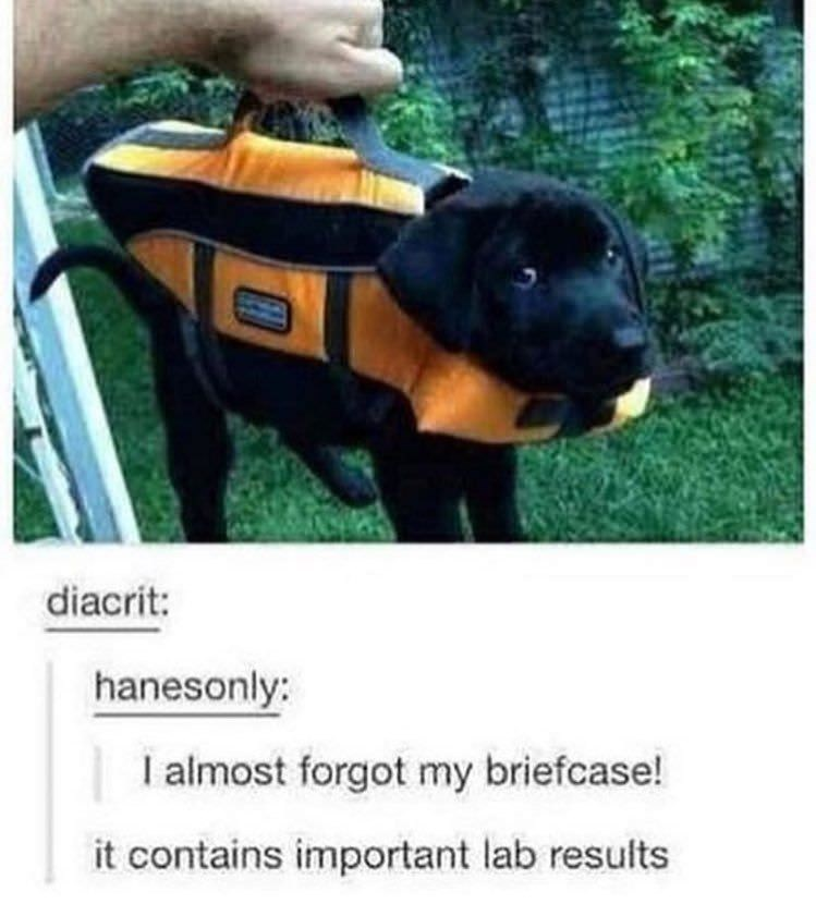 Dog - diacrit: hanesonly: I almost forgot my briefcase! it contains important lab results