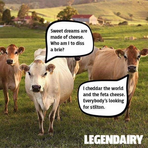 Bovine - Sweet dreams are made of cheese Who am I to diss a brie? I cheddar the world and the feta cheese. Everybody's looking for stilton. LEGENDAIRY