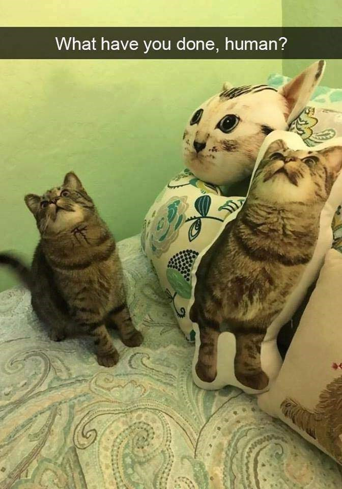 Cat - What have you done, human?