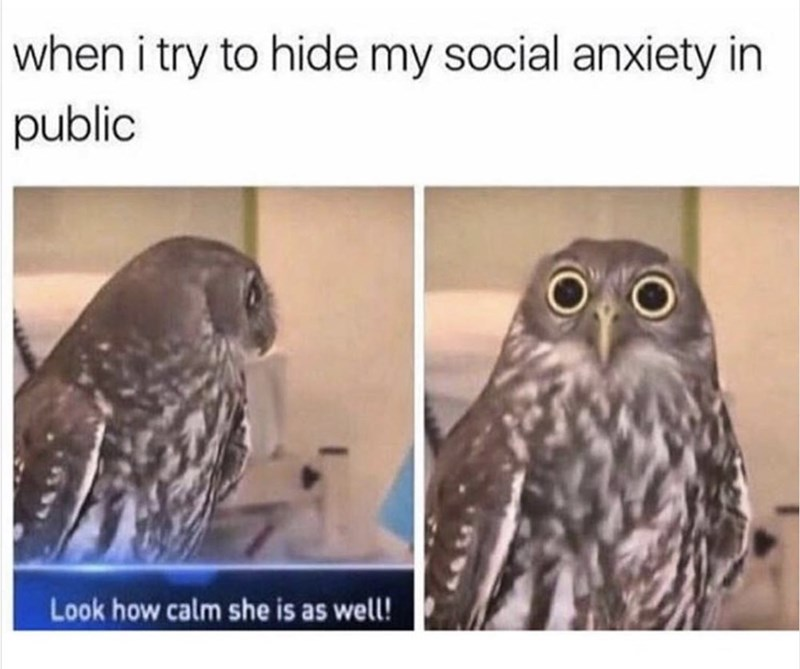 Owl - when i try to hide my social anxiety in public Look how calm she is as well!