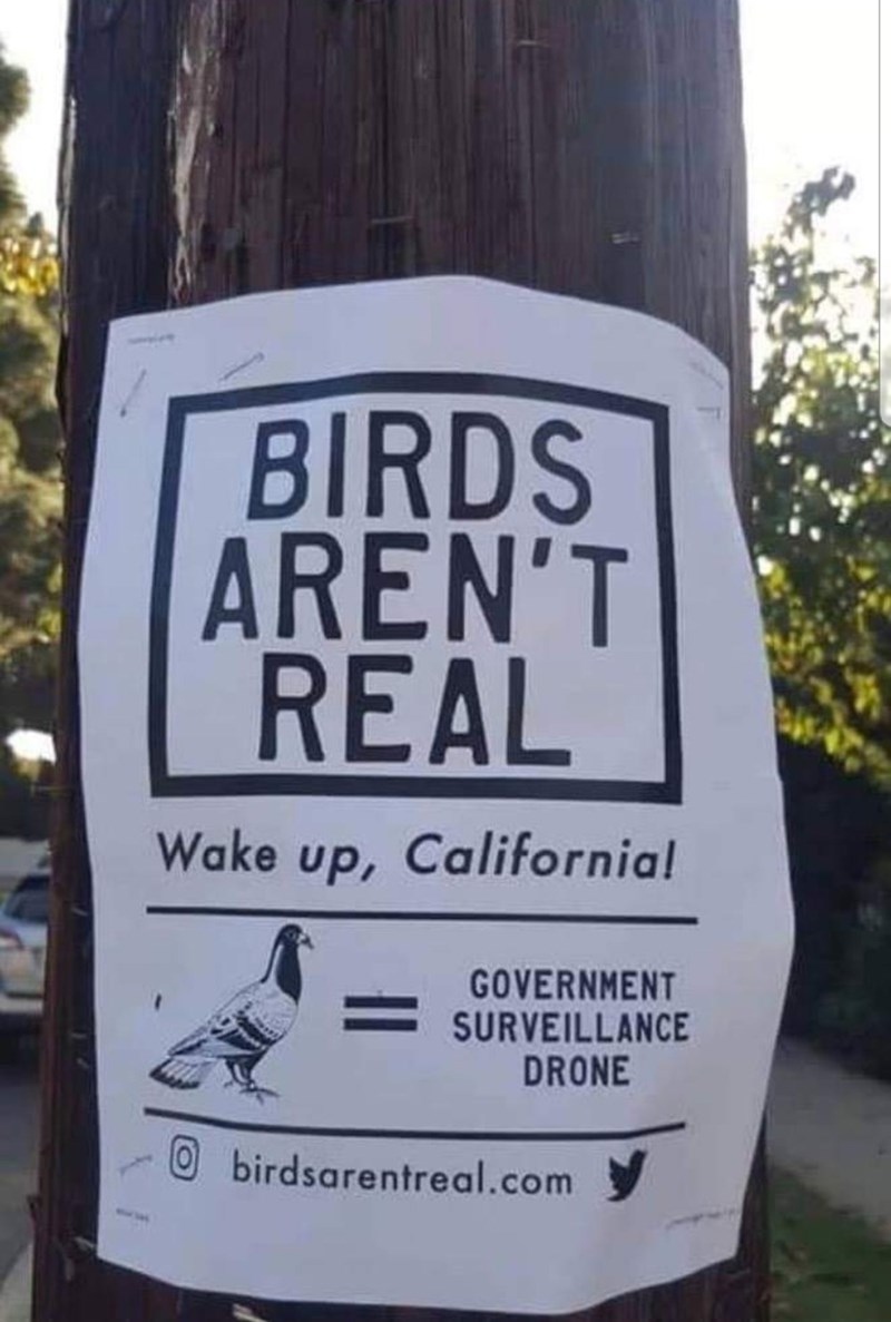 "Sign that reads, ""Birds aren't real - Wake up, California, birds = government surveillance drone"""