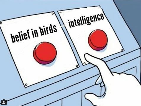 intelligence belief in birds