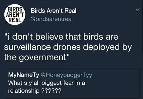 """Text - BIRDS Birds Aren't Real AREN'T@birdsarentreal REAL """"i don't believe that birds are surveillance drones deployed by the government"""" MyNameTy @HoneybadgerTyy What's y'all biggest fear in a relationship ?????? >"""
