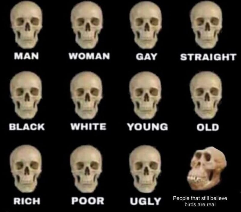 Skull - MAN WOMAN GAY STRAIGHT YOUNG BLACK WHITE OLD People that still believe birds are real POOR RICH UGLY