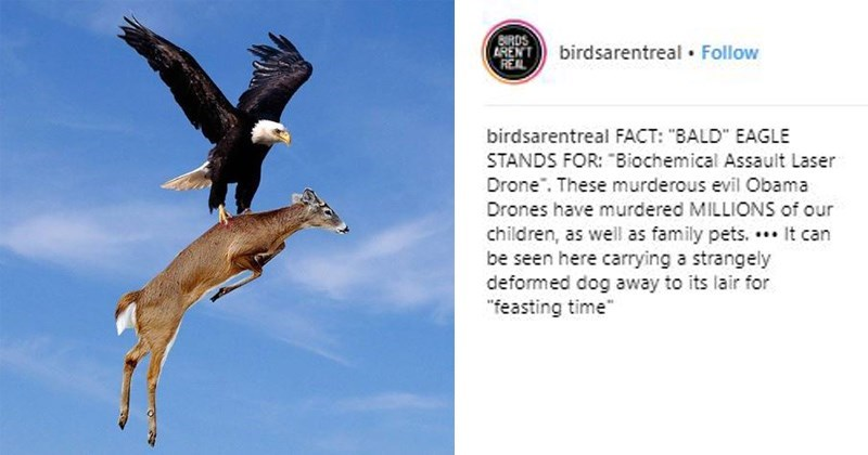 """Bird - BIRDS 2RENTbirdsarentreal Follow birdsarentreal FACT: """"BALD"""" EAGLE STANDS FOR: Biochemical Assault Laser Drone. These murderous evil Obama Drones have murdered MILLIONS of our children, as well as family pets. ..It can be seen here carrying a strangely defomed dog away to its lair for """"feasting time"""