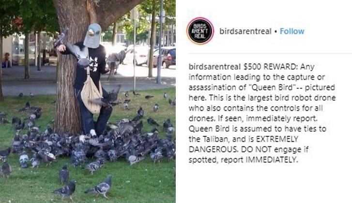 """Adaptation - BRDS ARENT REAL birdsarentreal Follow birdsarentreal $500 REWARD: Any information leading to the capture or assassination of """"Queen Bird"""" pictured here. This is the largest bird robot drone who also contains the controls for all drones. If seen, immediately report. Queen Bird is assumed to have ties to the Taliban, and is EXTREMELY DANGEROUS. DO NOT engage if spotted, report IMMEDIATELY."""