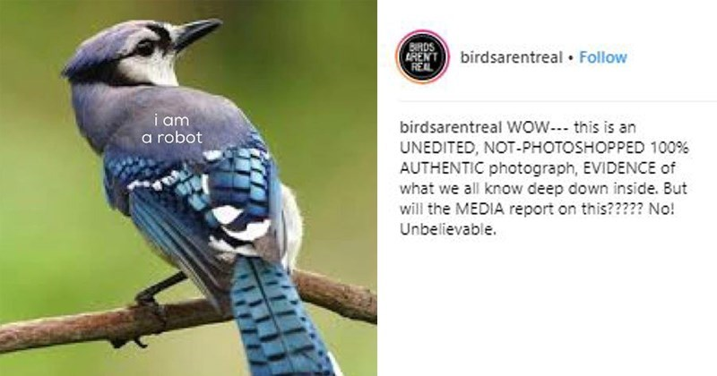 Bird - BRDS (ENTbirdsarentreal Follow REAL i am a robot birdsarentreal WoW. this is an UNEDITED, NOT-PHOTOSHOPPED 100 % AUTHENTIC photograph, EVIDENCE of what we all know deep down inside. But will the MEDIA report on this????? No! Unbelievable