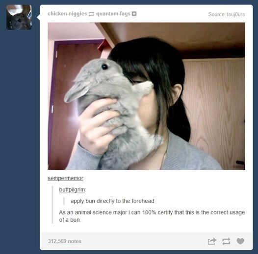 "Tumblr pic of a girl holding a cute bunny up to her face with the caption that reads, ""Apply bun directly to forehead - As an animal science major I can 100% certify that this is the correct usage of a bun"""