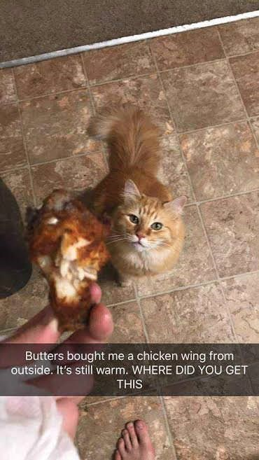 "Pic of a person holding a piece of fried chicken above a cat with the Snapchat overlay that reads, ""Butters brought me a chicken wing from outside. It's still warm. WHERE DID YOU GET THIS"""
