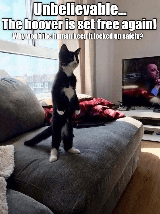 cat standing upright on a couch to get away from vacuum cleaner