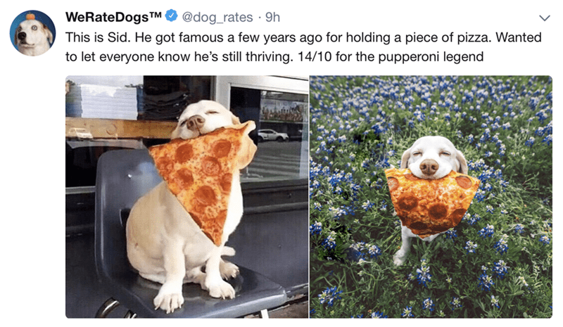 happy meme with pictures of dog holding a pizza in its mouth
