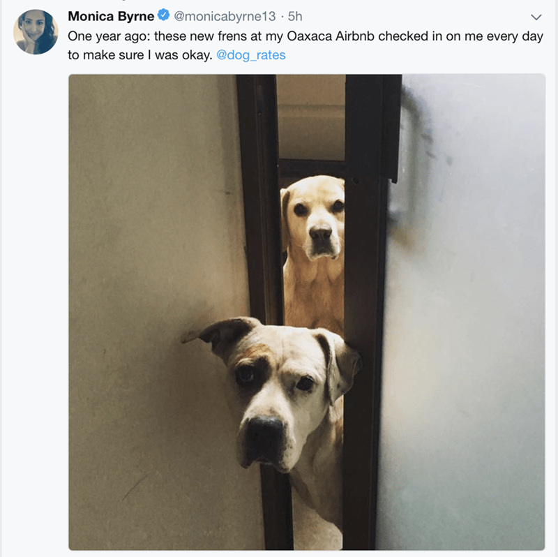 happy meme about local dogs checking up on tourists