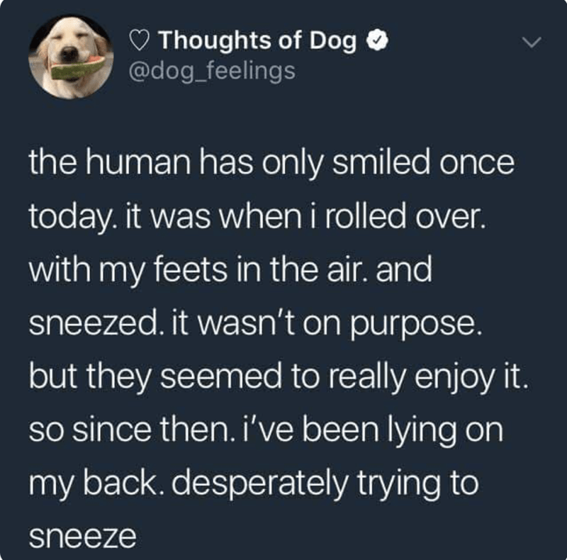 happy meme about dog trying to make its owner happy