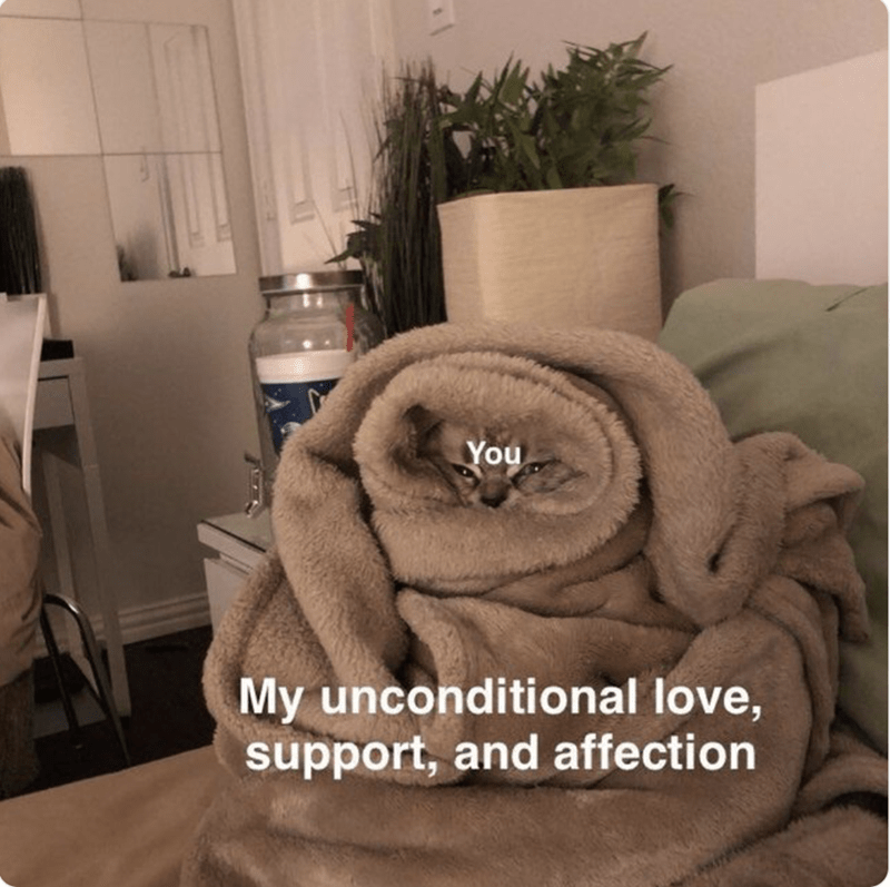 happy meme about wrapping you with love like a cat wrapped in blankets