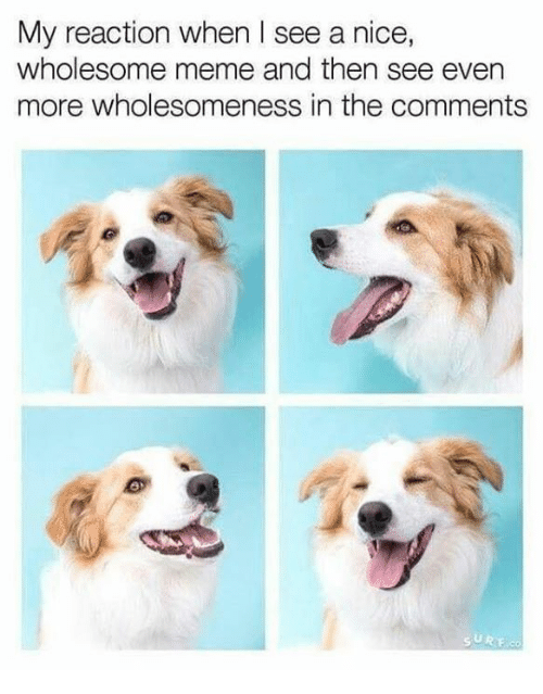 happy meme about seeing wholesome content with passport pictures of dog smiling