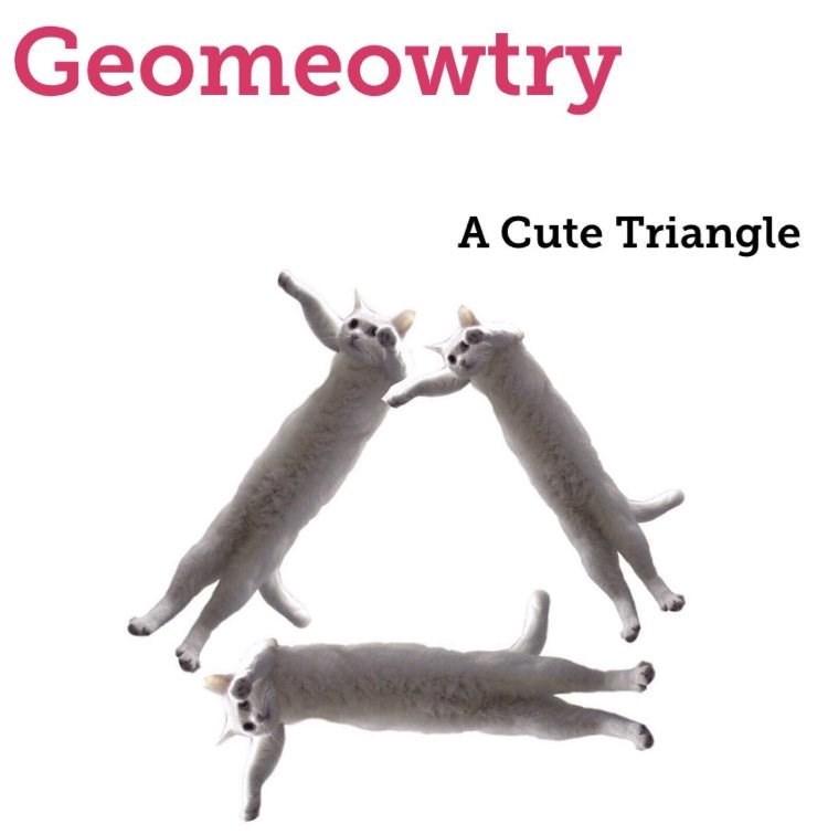 happy meme about cat geometry