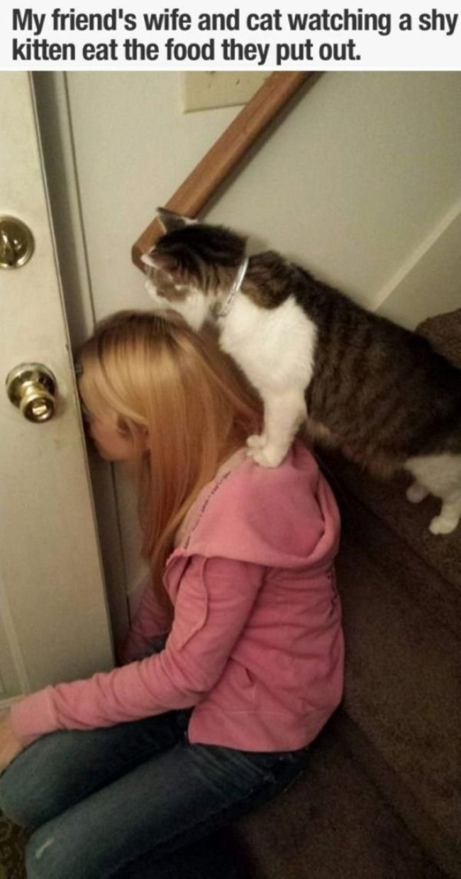 "Caption that reads, ""My friend's wife and cat watching a shy kitten eat the food they put out"" above a pic of a woman and a cat peaking through a cracked door"