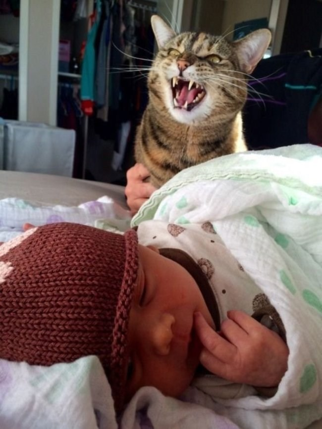 Pic of a newborn baby next to a cat angrily meowing
