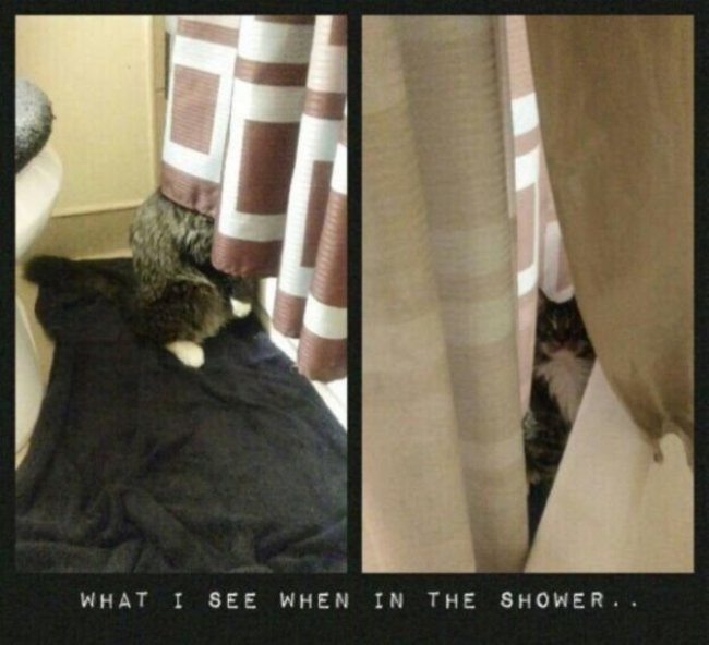 Curtain - THE SHOWER. WHAT I SEE WHEN IN