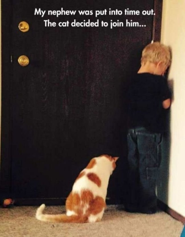 Dog - My nephew was put into time out. The cat decided to join him...