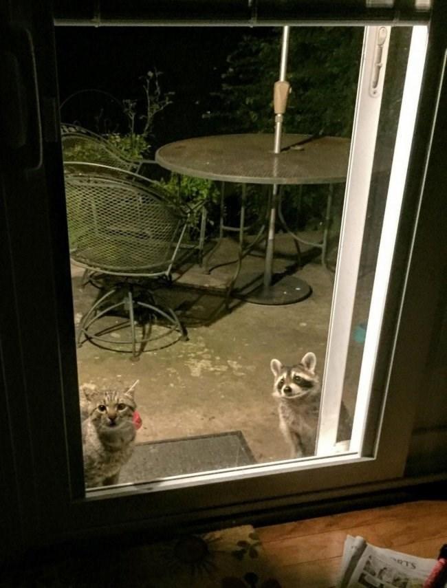 Window - RTS
