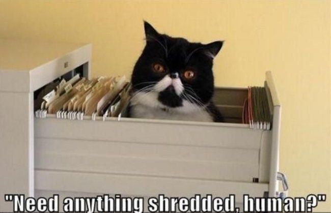 "Cat - ""Need anything shredded, human?"""