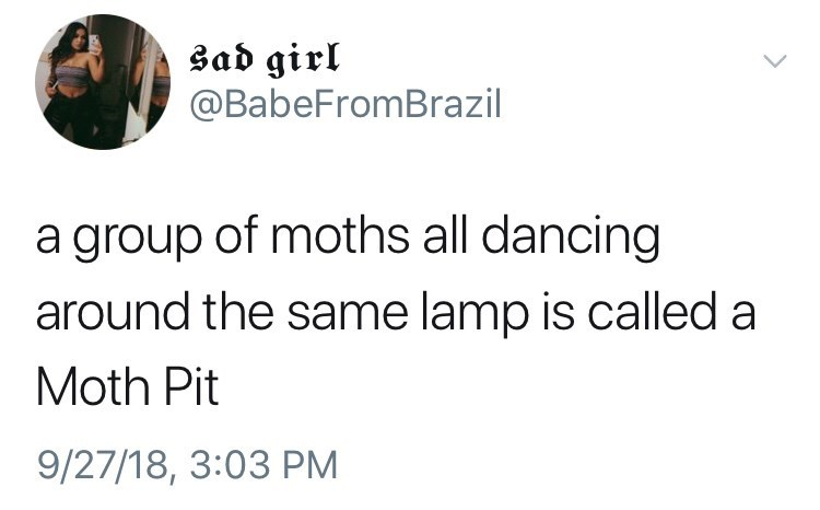 """tweet about dancing moths near a lamp are called """"Moth Pit"""""""