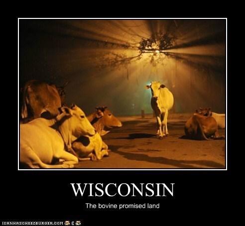 wisconsin meme - Adaptation - WISCONSIN The bovine promised land ICANHASCHEEZEURGER COM