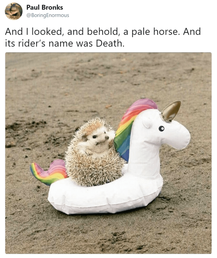 """Caption reads, """"And I looked, and behold, a pale horse. And its rider's name was Death"""" above a pic of a little hedgehog riding a pool floaty shaped like a unicorn"""